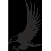 Aquila 06 (varie misure)