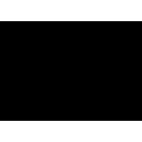 Ramo-foglie (varie misure)