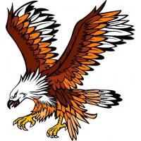 Aquila 01
